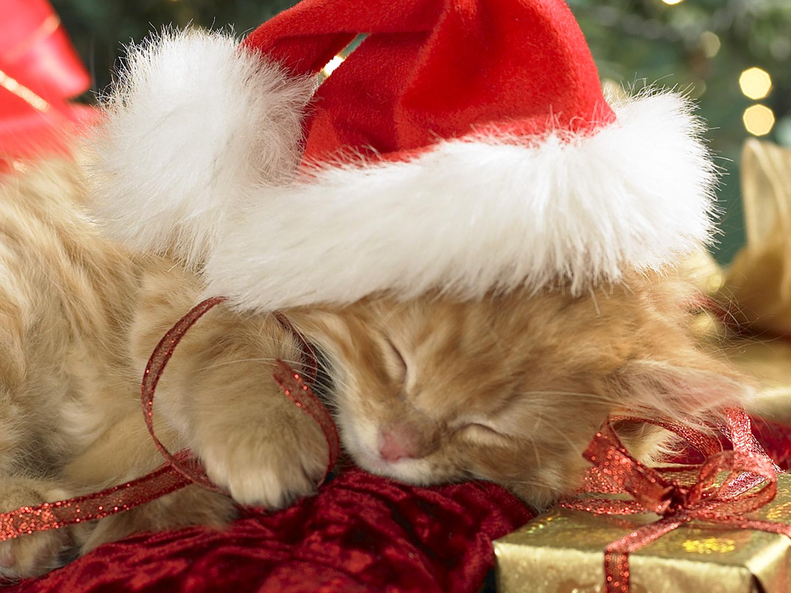 Super cute sleeping Christmas kitten